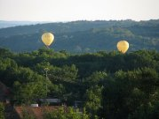 Balloons across the garden