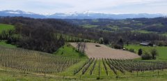 Charming Gite, in the Jurancon Vineyards, near Pau