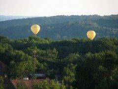 Balloons across the garden