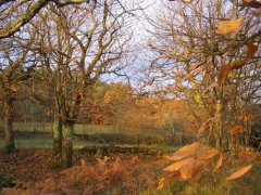 Late autumn colours in our fields