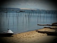 The incredible Bassin d'Arcachon