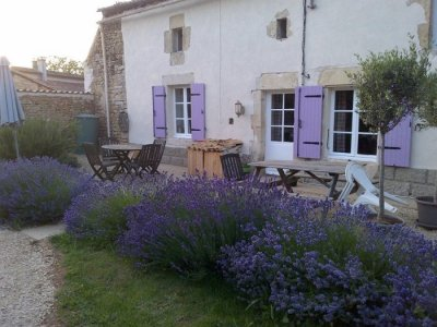 The cottage with lavender bed in full bloom!