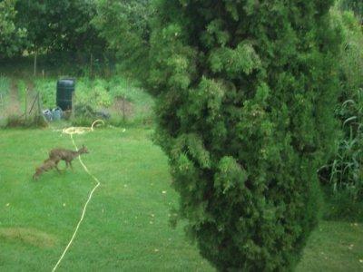 Deer visit